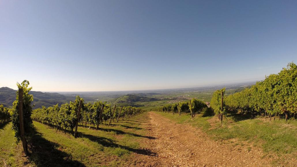 De Pieropan wijngaarden